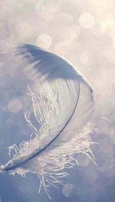 3cf6bd966287450ed88763670258d013--white-feathers-blue-feather