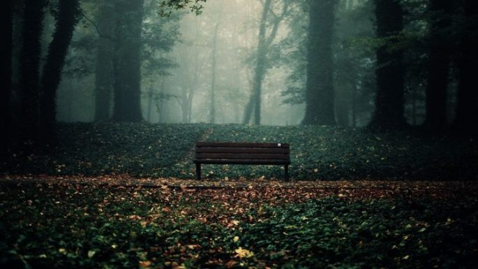 519509-photography-forest-leaves-Chill_Out-748x421