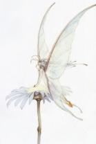 fairies4