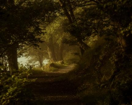 Fairy-path-through-forest