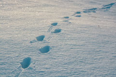 footprints-fresh-snow-vivid-background-86371506