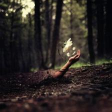 forestflower